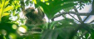 monkey-jozani